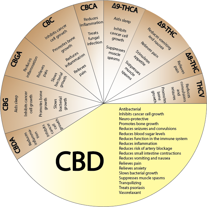 Dental CBD 2